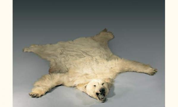 peau d 39 ours blanc polaire tableaux anciens haute epoque objets d 39 art et de bel ameublement. Black Bedroom Furniture Sets. Home Design Ideas