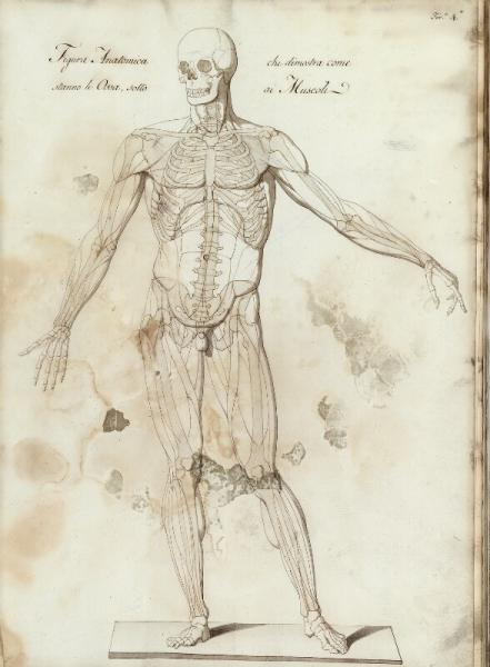 Luigi Scotti: An Italian album of 31 pages with anatomical drawings of bones, sculls [...]