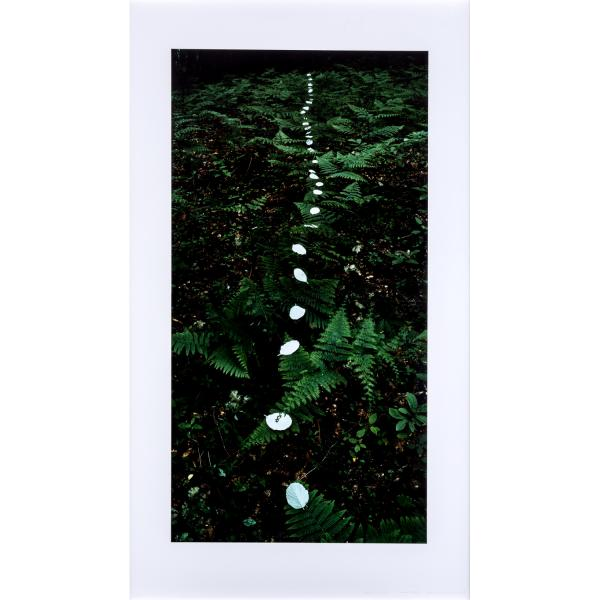 Andy Goldsworthy (né en 1956)   -  Garden Mountain, 4 juin 1989   -  Tirage [...]