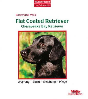 Flat Coated Retriever, Chesapeake Bay Retriever
