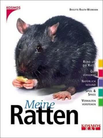 Meine Ratten; Verhalten Verstehen