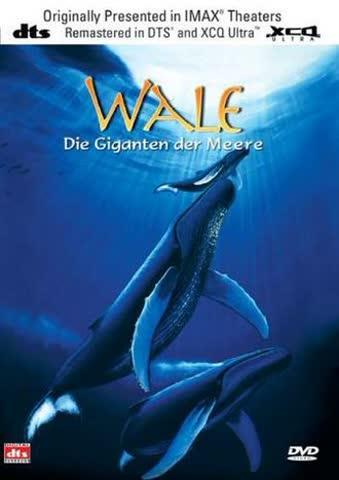 Wale - Giganten der Meere