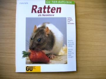Ratten als Heimtiere richtig pflegen und verstehen