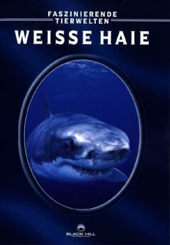 Weisser Hai: Außerhalb des Sicherheitskäfigs