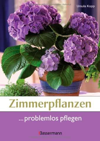 Zimmerpflanzen problemlos pflegen