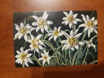 Alte Weihnachtskarten Edelweiss Querformat 10 Stk