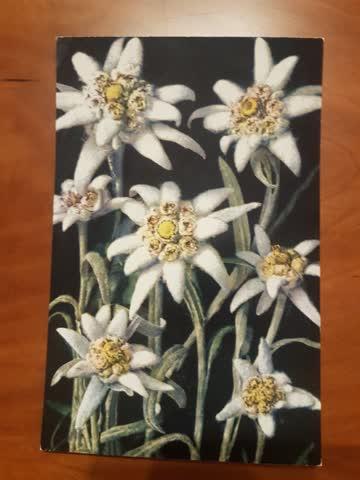 Alte Weihnachtskarten Edelweiss Hochformat 10 Stk