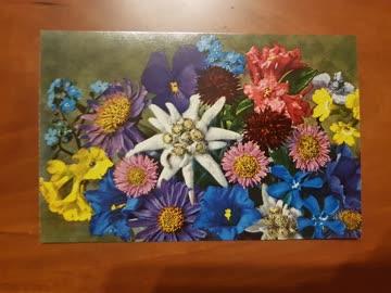 10 Stk. Alte Weihnachtskarten Alpenblumen Querformat