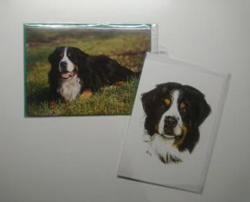 """Berner Sennenhund"" Doppelkarte mit Couvert"