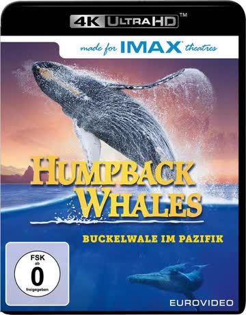 Humpback Whales [4K Ultra HD]