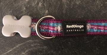Red Dingo Hundehalsband Einhorn