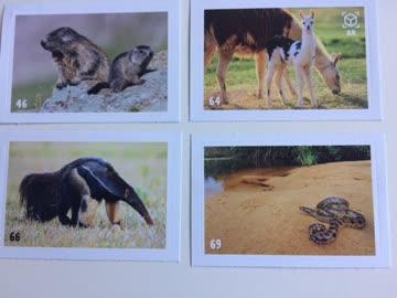 Animal Mania Planet Stickers