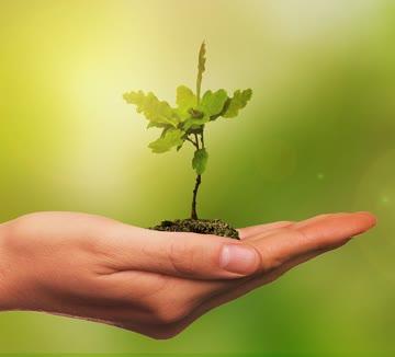 1x Baum pflanzen