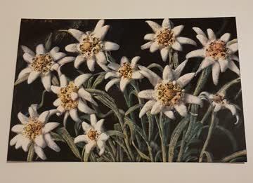 10 Stk. alte Postkarten Edelweiss Querformat