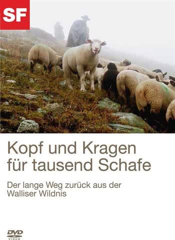 Kopf und Kragen für tausend Schafe