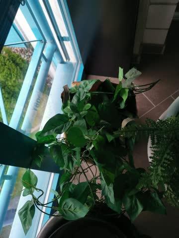 2x künstliche Hängepflanzen