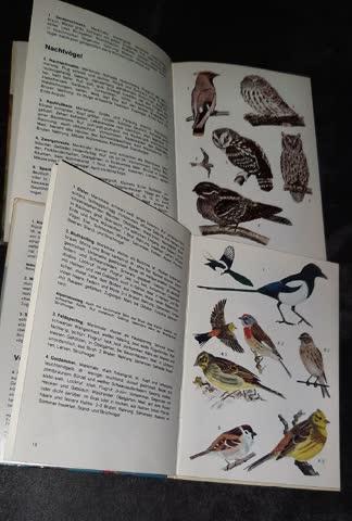 UNSERE Vögel