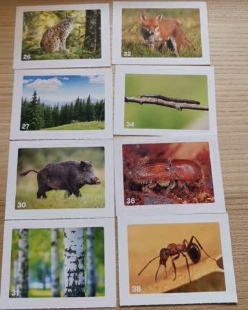 Migros Mania Nature Detectives Sticker