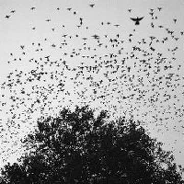 Loops The - But The Birds