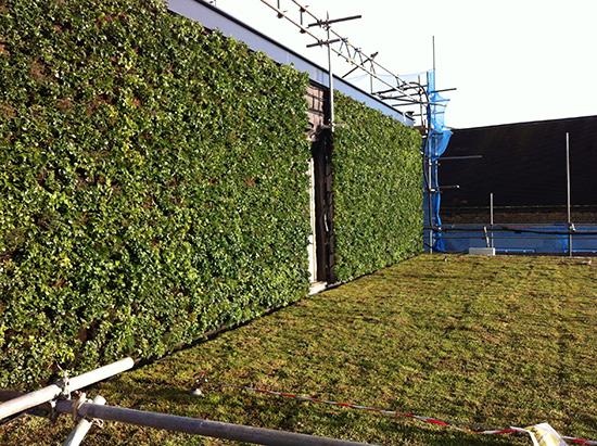 Green botanical wall architecture 2