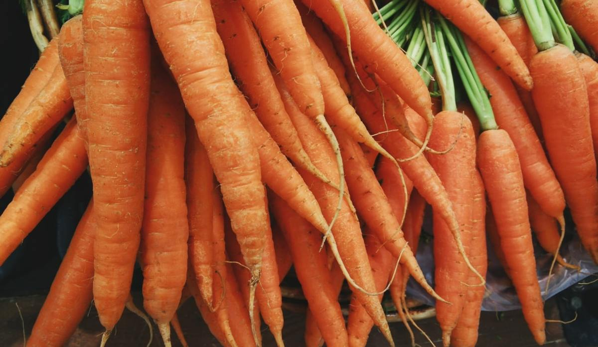 Organic carrots in bunches