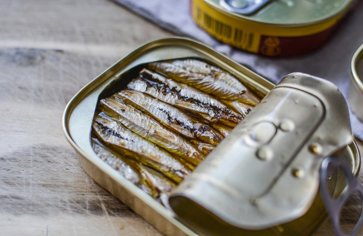 Oily sardine fish in a tin
