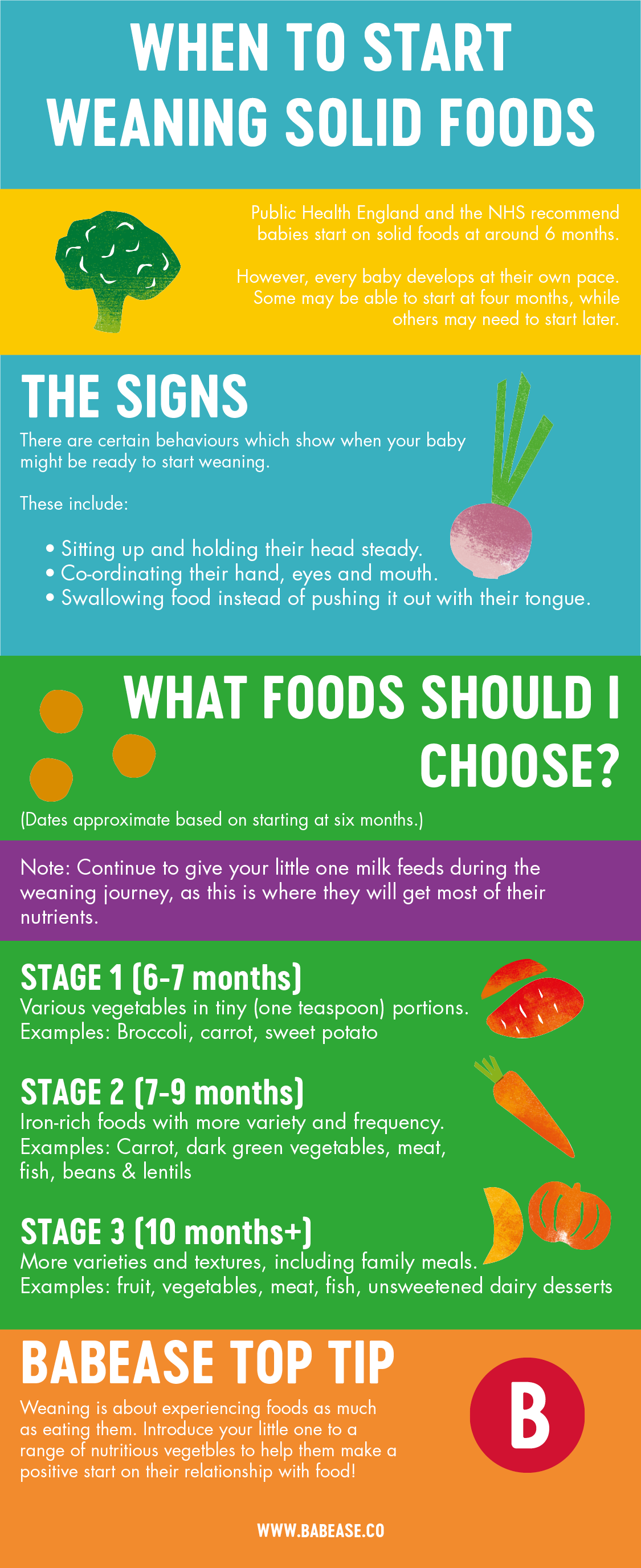 When to start weaning solid foods Babease infographic