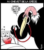 Medium gr ce vautour