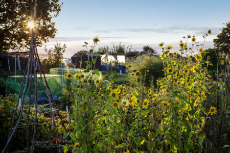Summer Morning at the Allotments by Mark Bolton