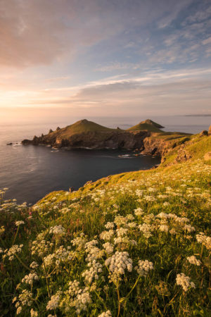 The Rumps by Ross Hoddinott