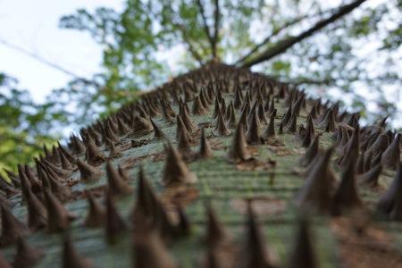 Spiky by Zozi Lencz