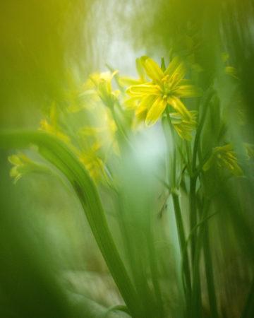 Spring Light by Elisabeth Liljenberg