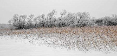 Winter Wetland by Elisabeth Liljenberg