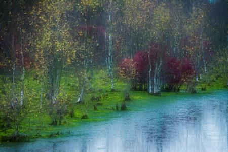 Coloured Autumn by Danièle Dugré