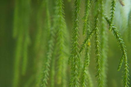 Evergreen by Julie Isaac