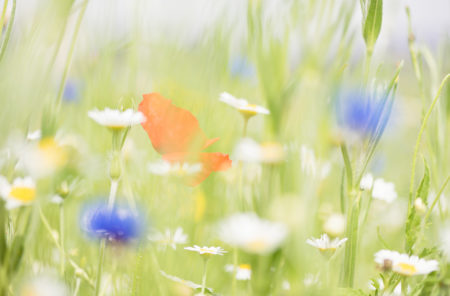 Painted Wildflower Meadow by Bernadette Meyers