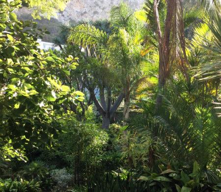 Gibraltar Botanic Gardens (The Alameda)