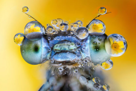 Adorned by the Dew by Alberto Ghizzi Panizza