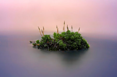 Moss Island by Ian Gilmour