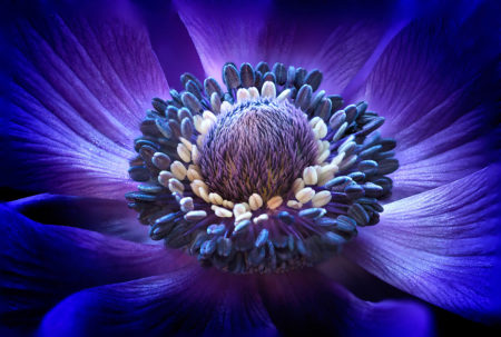 Anemone by Barbara Gardner