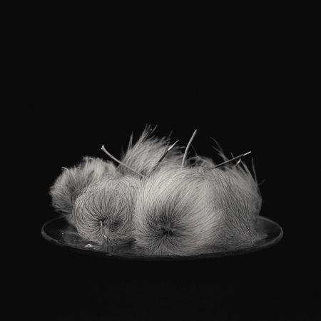 <em>Clematis</em> by Julia Robson