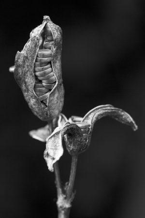 Seed Case by Gillian Plummer