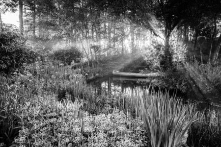 Dawn over the Pond by Carole Drake