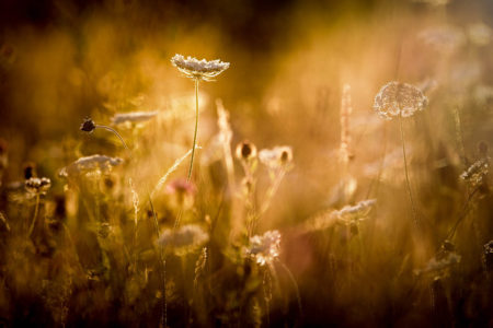 Meadow Sunset by Neil Davies