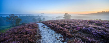 Heather and Mist by Mark Bauer