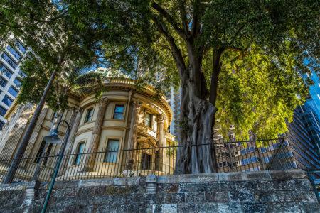 Brisbane Street Tree by Marion Sidebottom