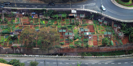 Allotments in Funchal by Sally Bevington