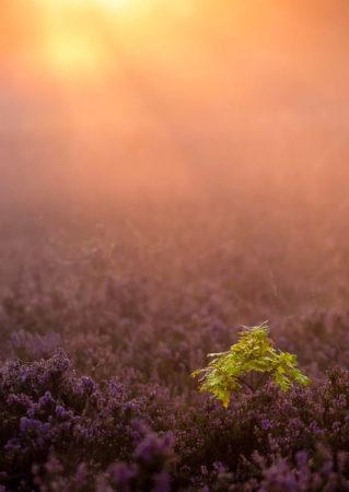 Little Oak by Steve Palmer