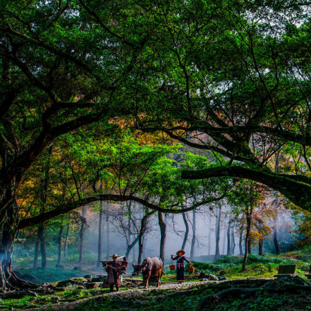 The Forest Track Leads Me Home by Jing Lai