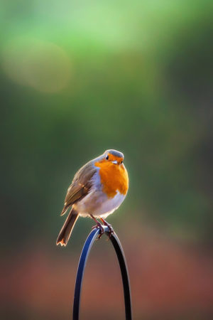 You Lookin' at Me? by Nik Munro